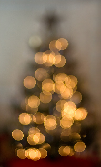 blurry tree